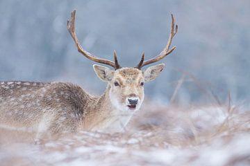 Hert in de sneeuw van Marianne Jonkman