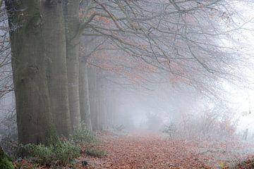 Nebliger Morgen im Wald von Eelke Brandsma