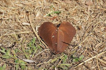 Liefde is overal van Ingrid Bargeman