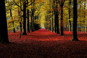 Herbst von Chris de Gier