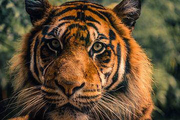 Tiger von Sylvia Schuur