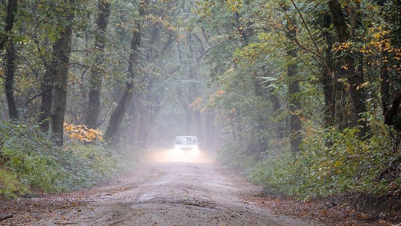 Gewagte Autofahrt in den Wäldern von Anjo ten Kate