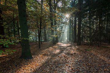 Herfst Zonnestralen van Wil de Boer