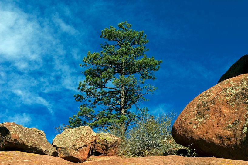 Red Rock with Pine. van Mikhail Pogosov
