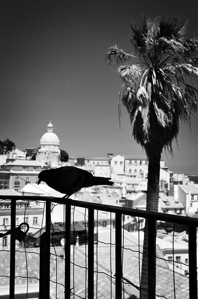 Vogel in Lissabon