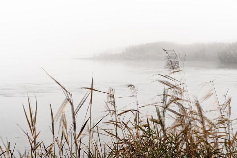 Nebelstimmung im Oderbruch von Ralf Lehmann