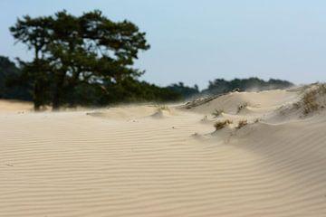Zandverstuiving van Jos Reimering