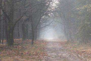 mystischer Pfad im Wald von Tania Perneel