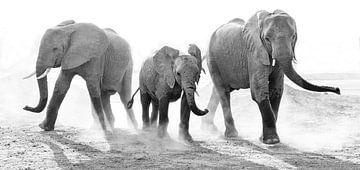 Verstaubter Familien-Elefant von Anja Brouwer Fotografie