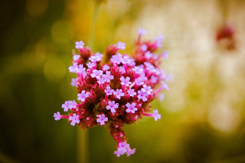 Roze bloemen van Koop je Canvas
