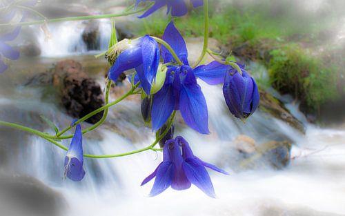 Bloemen bij waterval van