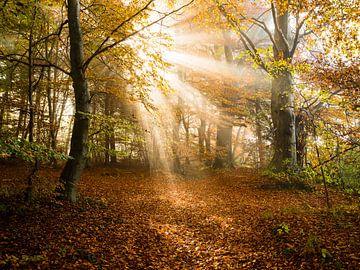 Rayons de soleil sur Denis Feiner