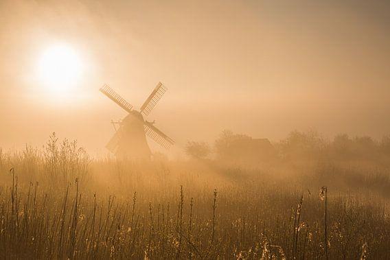 De Noordermolen (Noorddijk, Gr.) in ochtendlicht van goud.