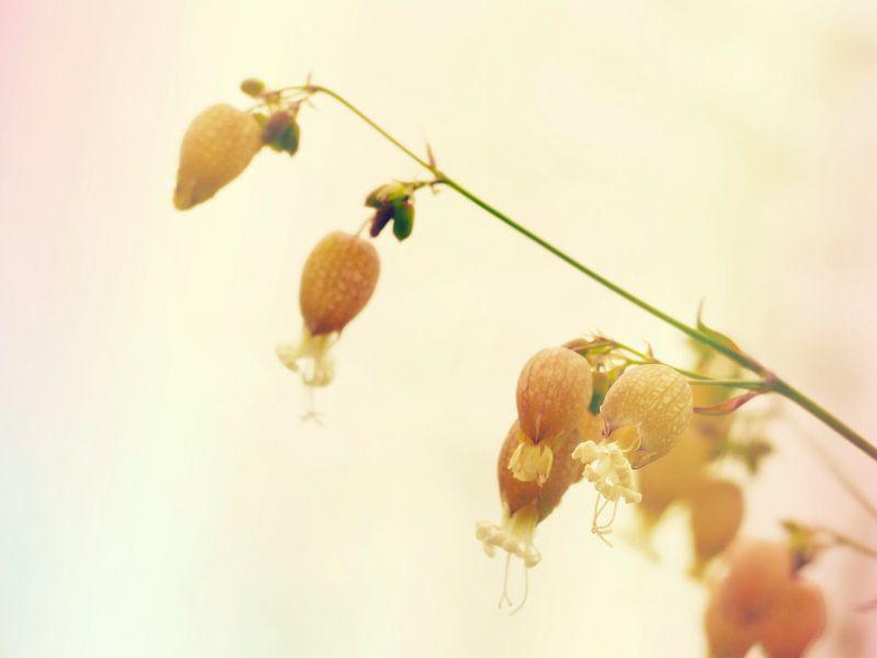 In the meadow 2 van brava64 - Gabi Hampe