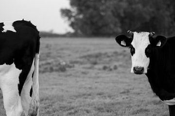 hollandse koeien van Helene de Jongh
