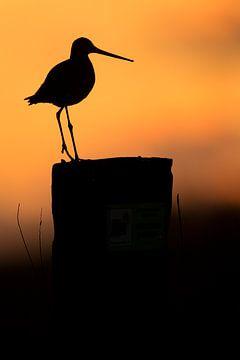 Grutto op paal in tegenlicht tijdens zonsondergang van Jeroen Stel
