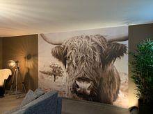 Klantfoto: Schotse hooglander van Jo Beerens, op behang