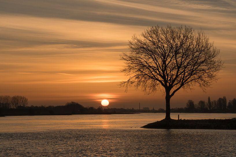 Lever du soleil sur un arbre sur Moetwil en van Dijk - Fotografie