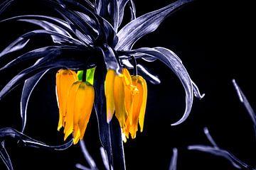 Kaiserkrone schwarz-weiß mit gelben Blüten Pflanzenblüte von Frank Ketelaar