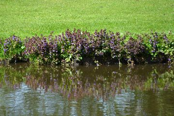 Blumen im Spiegel des Wassers