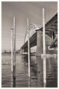 Onder de brug van