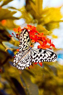 Vlinder 2013 von Jolien Somers