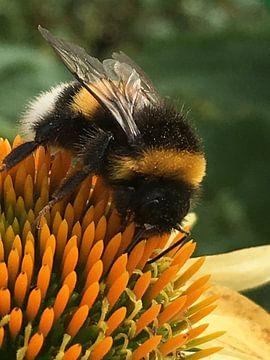 Bee van