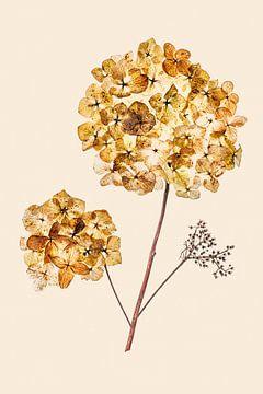 hortensia takje van Klaartje Majoor