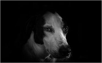 Hunde von Evelien van der Horst