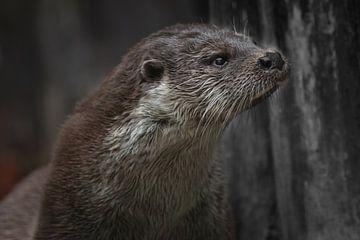 Close-up van de otterkop in profiel van een kwiek nat beest van Michael Semenov