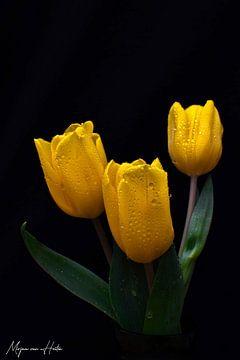 Gelbe Tulpen von Mirjam Van Houten
