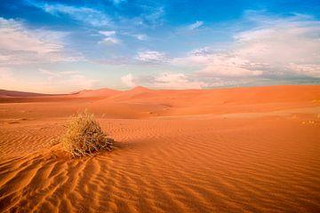 Desert van Thomas Froemmel