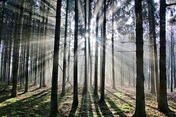 Licht in de ochtend van Benjamin van de Grift