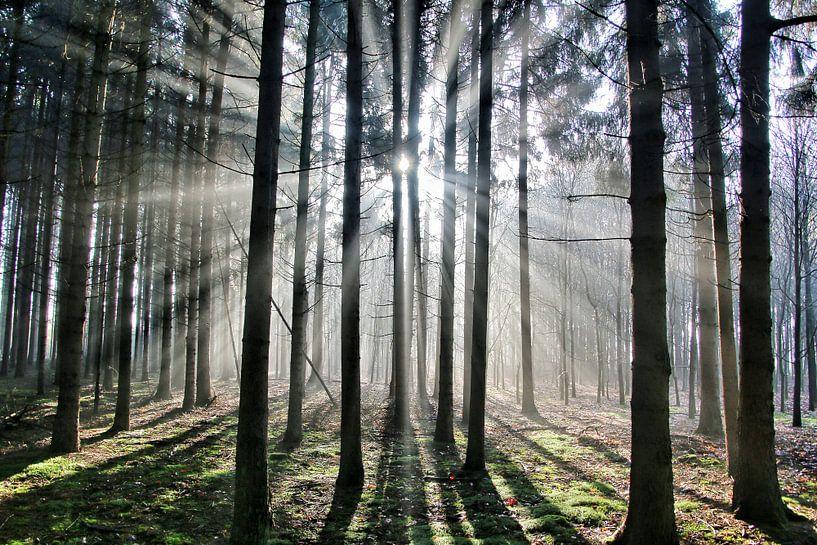 Licht in de ochtend von Benjamin van de Grift