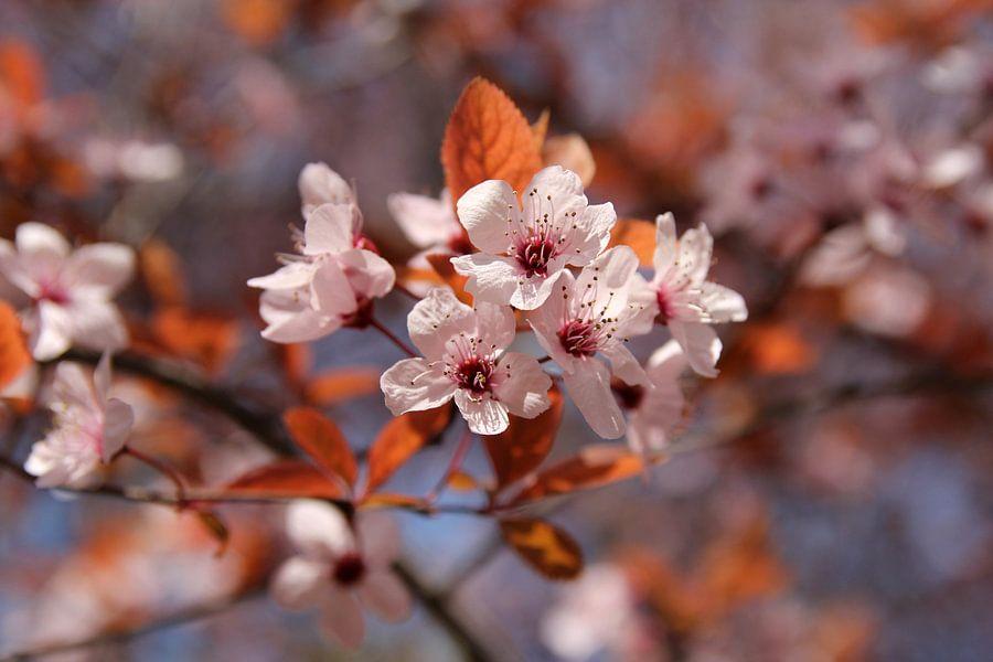 The Blossom van Cornelis (Cees) Cornelissen