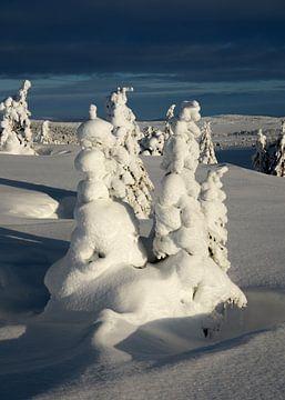 Schneebäume, Norwegen von Adelheid Smitt