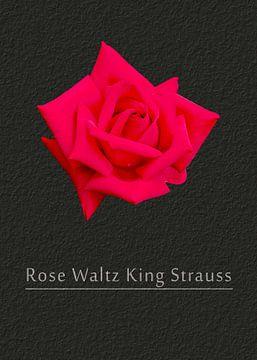 Rose Walzerkönig Strauss von Leopold Brix
