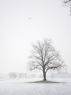 Winters landschap met reiger van Pascal Raymond Dorland