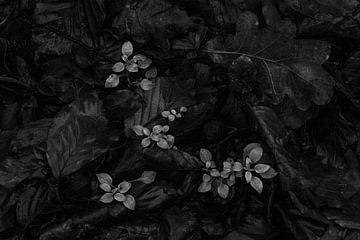 Scène d'automne en noir et blanc avec des feuilles dans la forêt sur Cocky Anderson