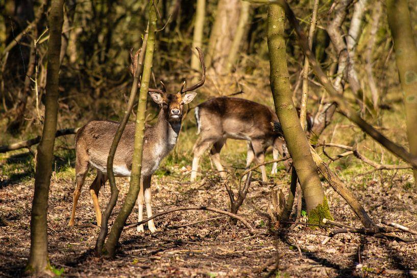 Herten in het bos van Brian Morgan