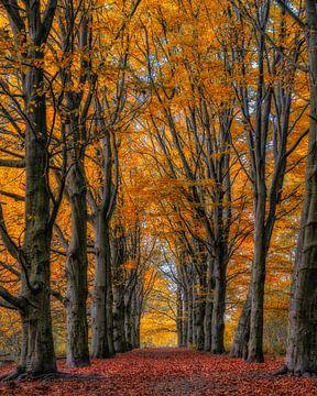 Bos der Onverzettelijken