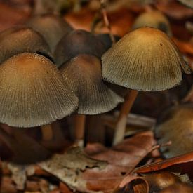 Paddenstoelen in het bos van Joyce Derksen