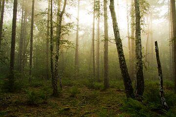Mysteriös im Wald von Sabina Meerman