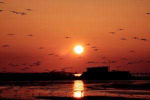 Het ontwaken  van de vogels