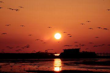 Het ontwaken  van de vogels van Jef Folkerts