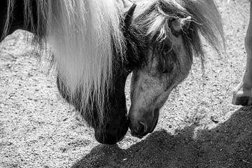 Pferde schwarz-weiß von Sylvia Schuur