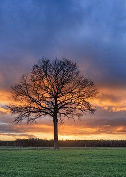 Ländliche Landschaft mit Baum in einem Feld und roten sunset_2 von Tony Vingerhoets