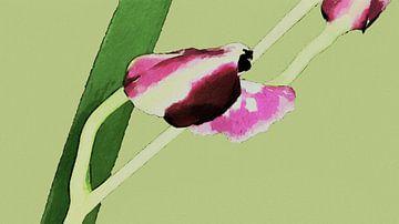 Opengaande Orchidee - Schilderij van Schildersatelier van der Ven
