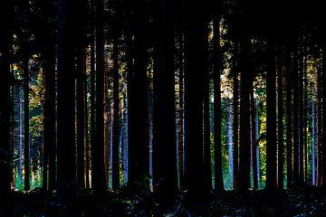 Wald durch die Bäume von Leroy Scheer