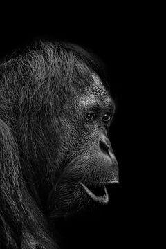 Orang-Utan auf dunklem Hintergrund, ein kraftvolles Porträt in Schwarz-Weiß von Ron Meijer Photo-Art